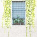 plantas sin mantenimiento